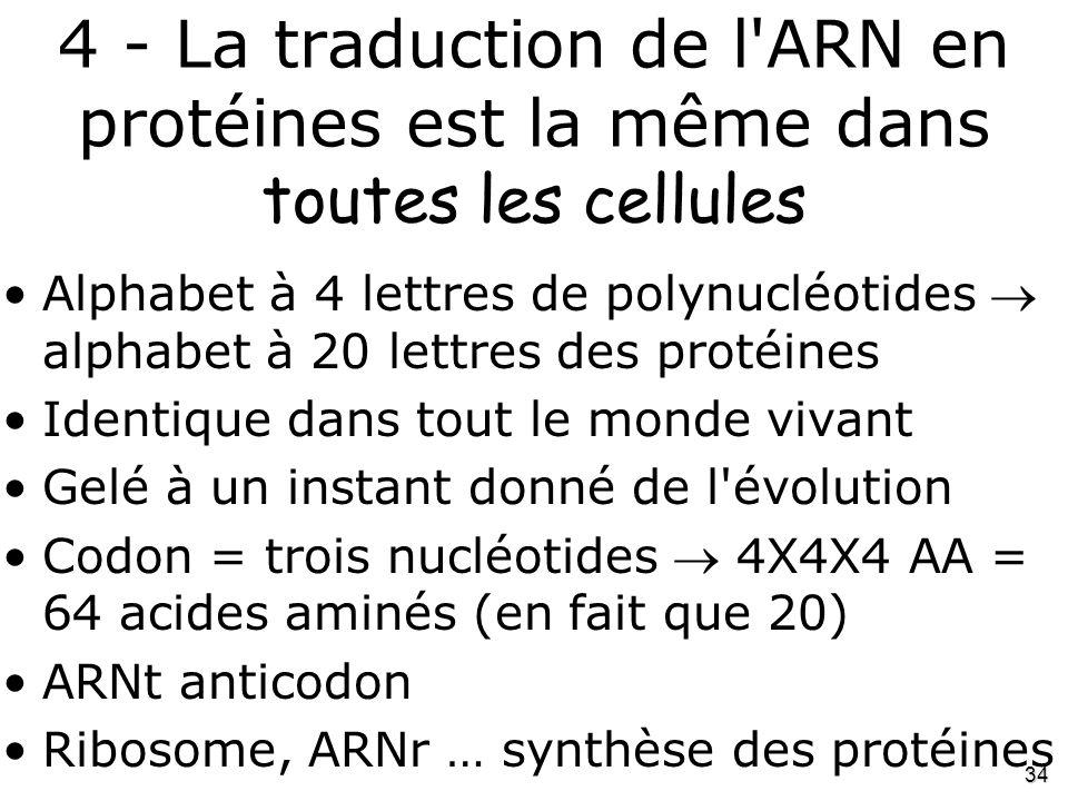 34 4 - La traduction de l'ARN en protéines est la même dans toutes les cellules •Alphabet à 4 lettres de polynucléotides  alphabet à 20 lettres des p