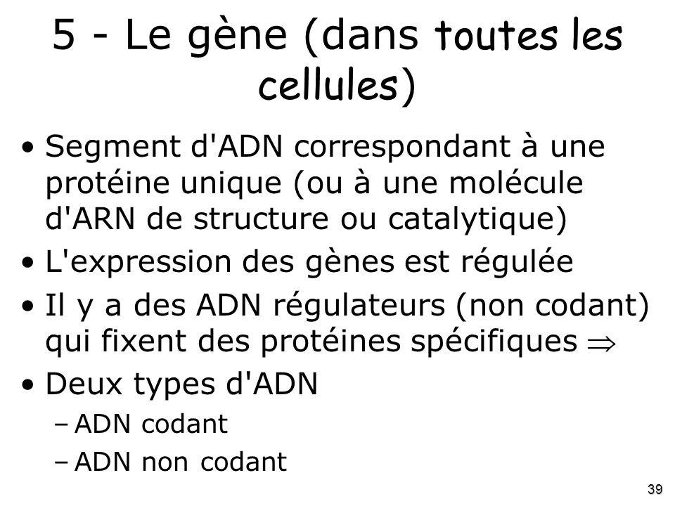 39 5 - Le gène (dans toutes les cellules ) •Segment d'ADN correspondant à une protéine unique (ou à une molécule d'ARN de structure ou catalytique) •L