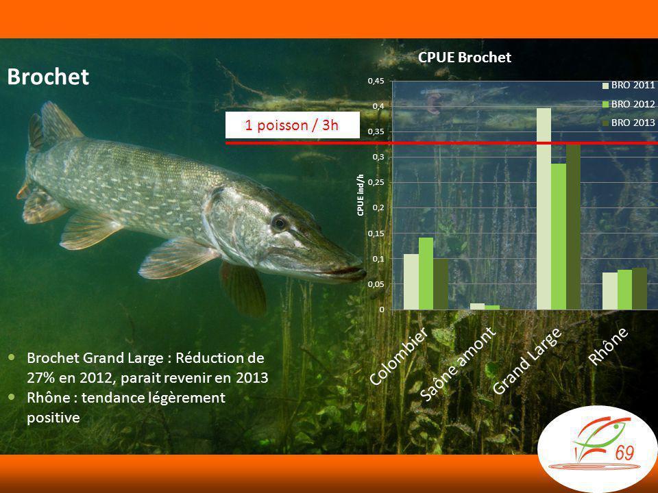 Brochet 1 poisson / 3h  Brochet Grand Large : Réduction de 27% en 2012, parait revenir en 2013  Rhône : tendance légèrement positive