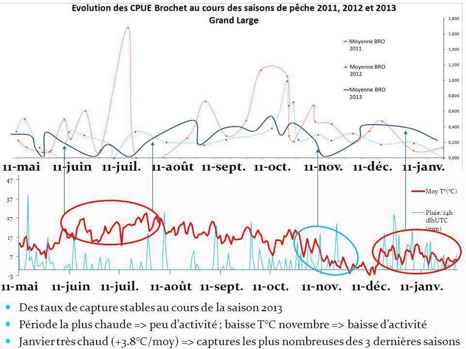  Des taux de capture stables au cours de la saison 2013  Période la plus chaude => peu d'activité ; baisse T°C novembre => baisse d'activité  Janvier très chaud (+3.8°C/moy) => captures les plus nombreuses des 3 dernières saisons