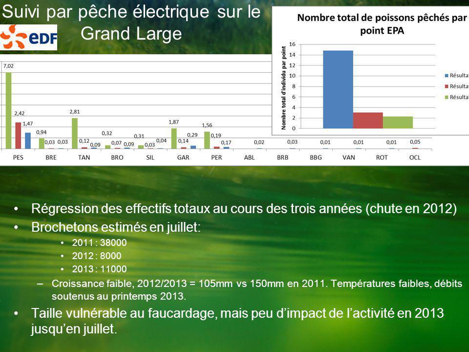 Suivi par pêche électrique sur le Grand Large •Régression des effectifs totaux au cours des trois années (chute en 2012) •Brochetons estimés en juillet: •2011 : 38000 •2012 : 8000 •2013 : 11000 –Croissance faible, 2012/2013 = 105mm vs 150mm en 2011.