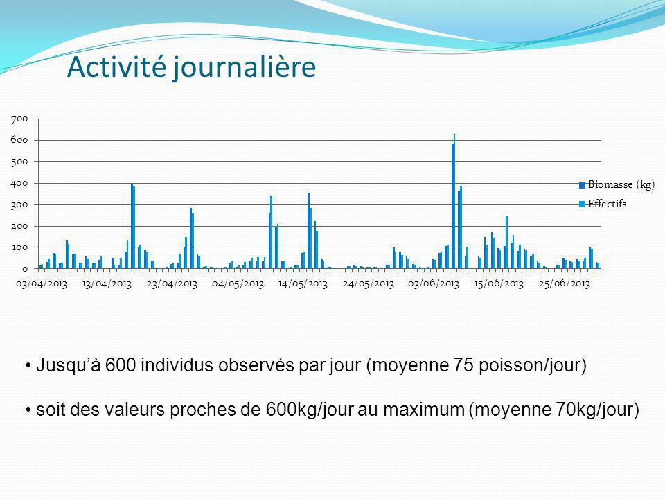 Activité journalière • Jusqu'à 600 individus observés par jour (moyenne 75 poisson/jour) • soit des valeurs proches de 600kg/jour au maximum (moyenne 70kg/jour)