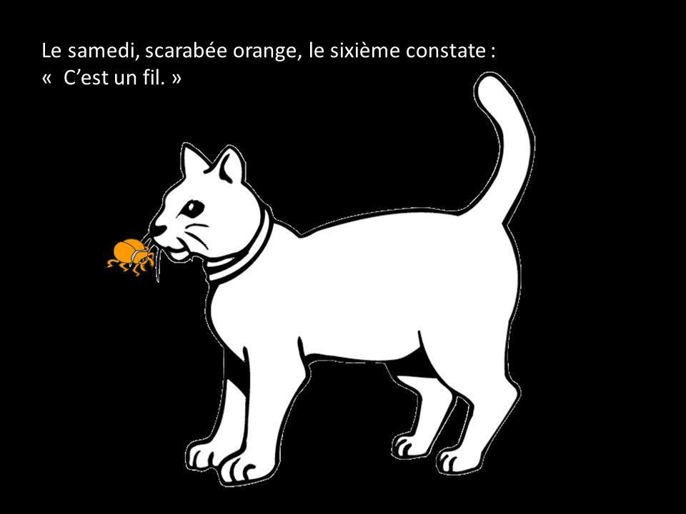 Le samedi, scarabée orange, le sixième constate : « C'est un fil. »