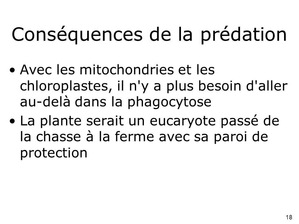 18 Conséquences de la prédation •Avec les mitochondries et les chloroplastes, il n'y a plus besoin d'aller au-delà dans la phagocytose •La plante sera