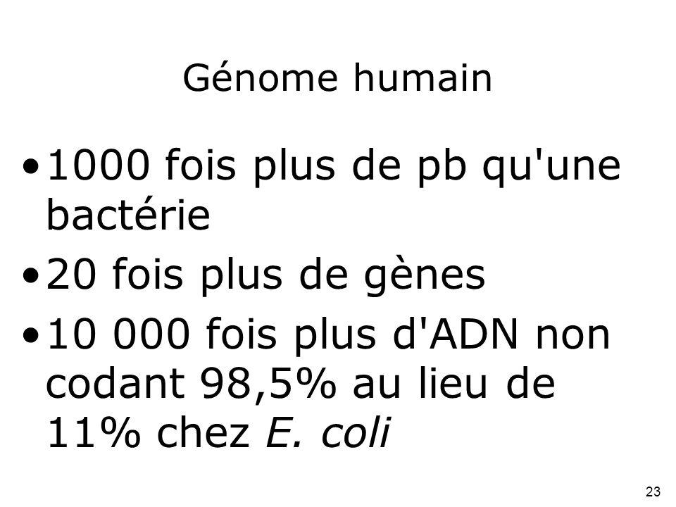 23 Génome humain •1000 fois plus de pb qu'une bactérie •20 fois plus de gènes •10 000 fois plus d'ADN non codant 98,5% au lieu de 11% chez E. coli