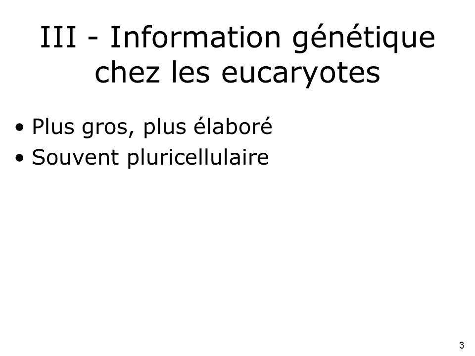 3 III - Information génétique chez les eucaryotes •Plus gros, plus élaboré •Souvent pluricellulaire
