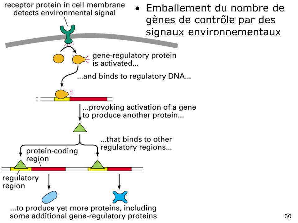 30 Fig 1-40 •Emballement du nombre de gènes de contrôle par des signaux environnementaux