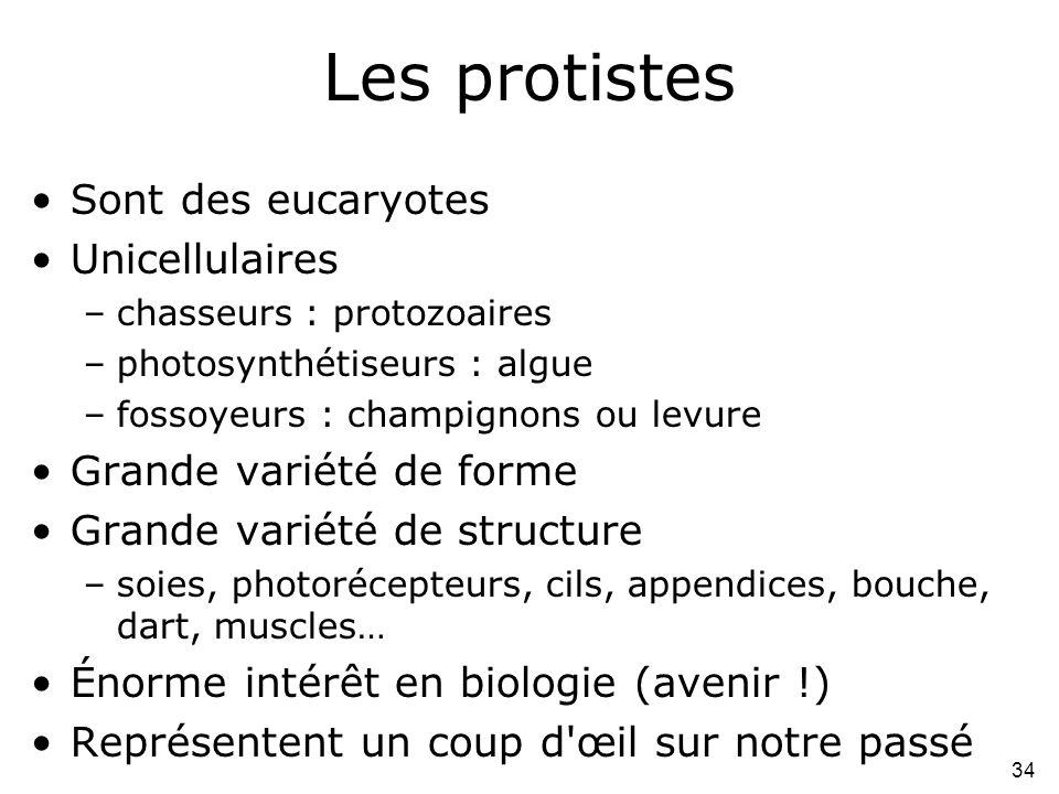 34 Les protistes •Sont des eucaryotes •Unicellulaires –chasseurs : protozoaires –photosynthétiseurs : algue –fossoyeurs : champignons ou levure •Grand
