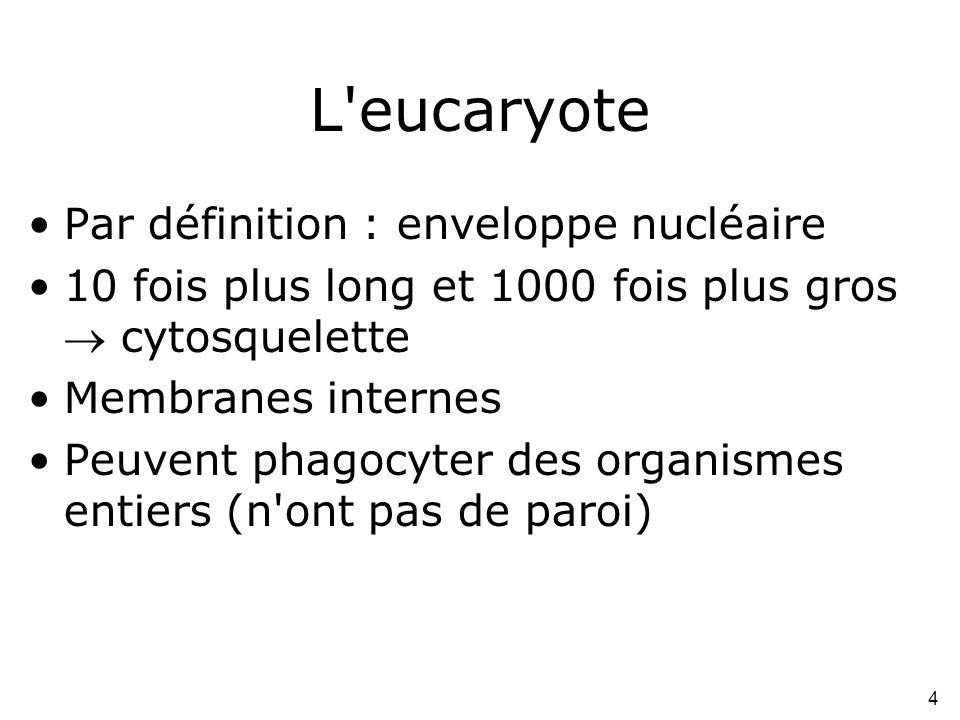 4 L'eucaryote •Par définition : enveloppe nucléaire •10 fois plus long et 1000 fois plus gros  cytosquelette •Membranes internes •Peuvent phagocyter
