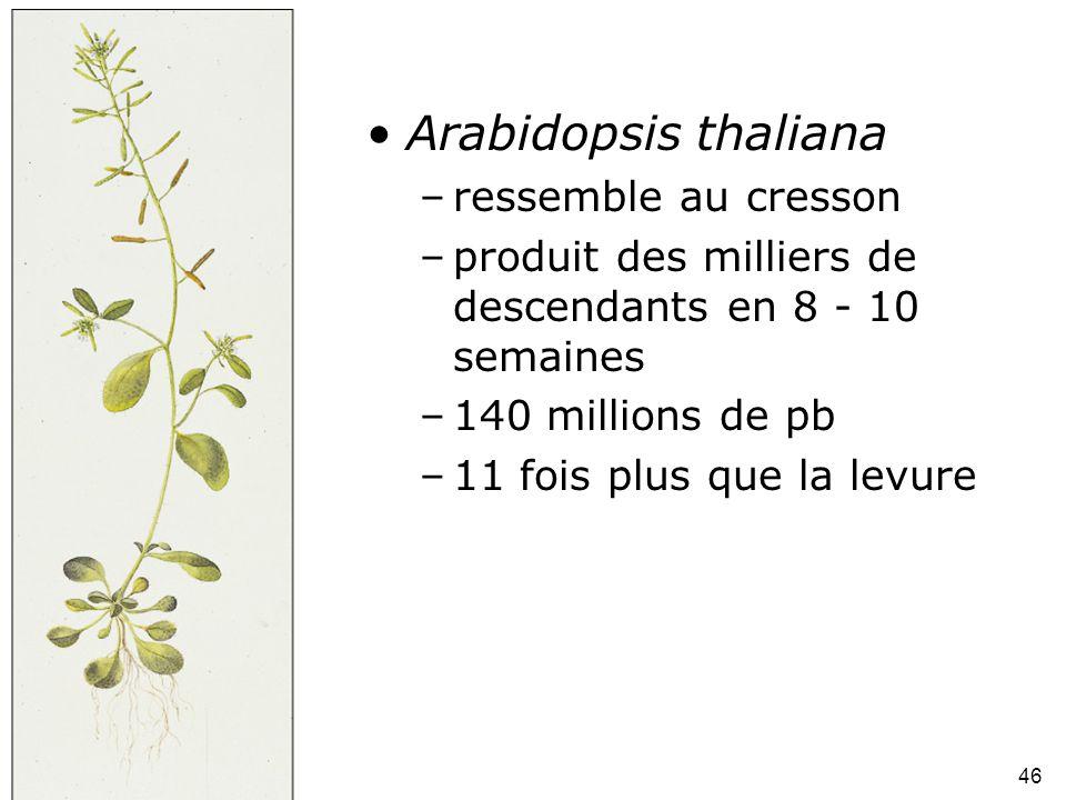 46 Fig 1-46 •Arabidopsis thaliana –ressemble au cresson –produit des milliers de descendants en 8 - 10 semaines –140 millions de pb –11 fois plus que