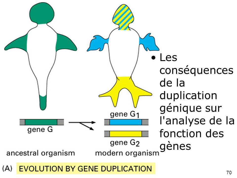 70 Fig 1-51(A) •Les conséquences de la duplication génique sur l'analyse de la fonction des gènes