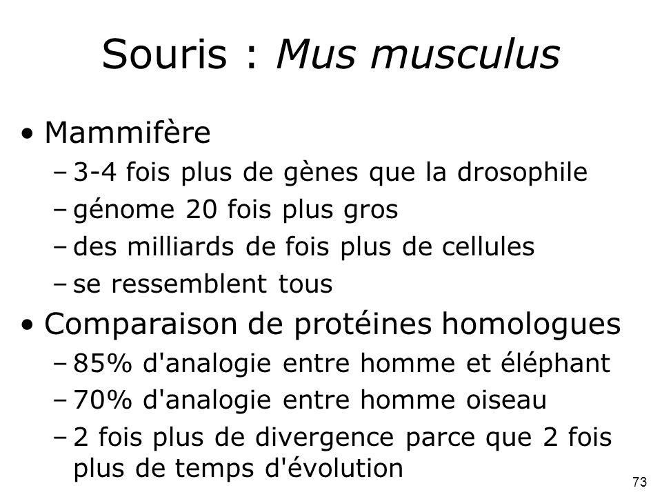 73 Souris : Mus musculus •Mammifère –3-4 fois plus de gènes que la drosophile –génome 20 fois plus gros –des milliards de fois plus de cellules –se re