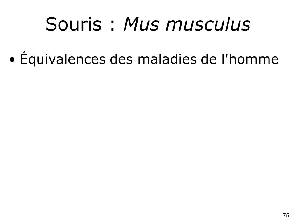 75 Souris : Mus musculus •Équivalences des maladies de l'homme