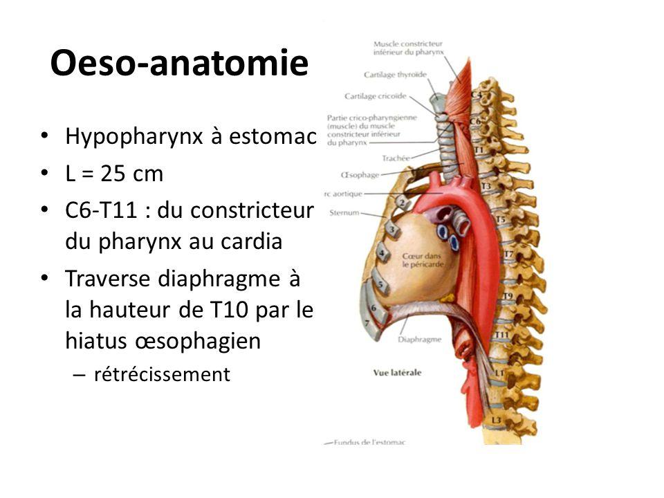 Oeso-anatomie • Hypopharynx à estomac • L = 25 cm • C6-T11 : du constricteur du pharynx au cardia • Traverse diaphragme à la hauteur de T10 par le hia
