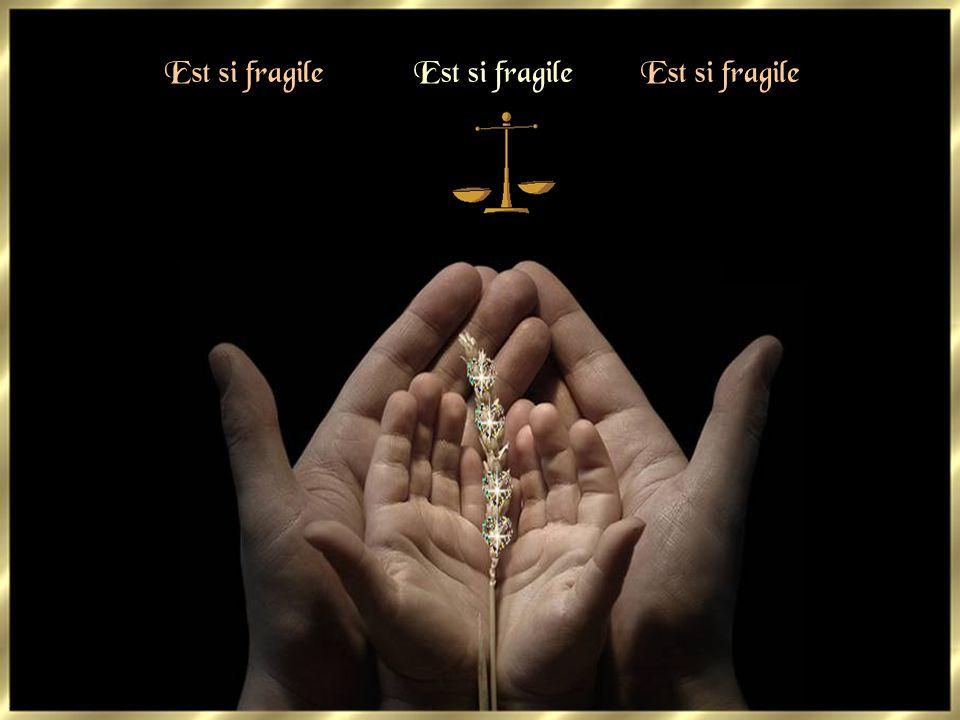 Et sitôt on se pense Dieu Sitôt on recoit une croix Car la vie est si fragile