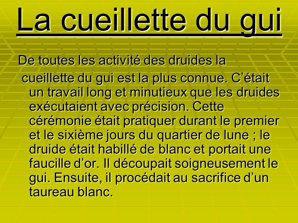 La cueillette du gui De toutes les activité des druides la cueillette du gui est la plus connue. C'était un travail long et minutieux que les druides