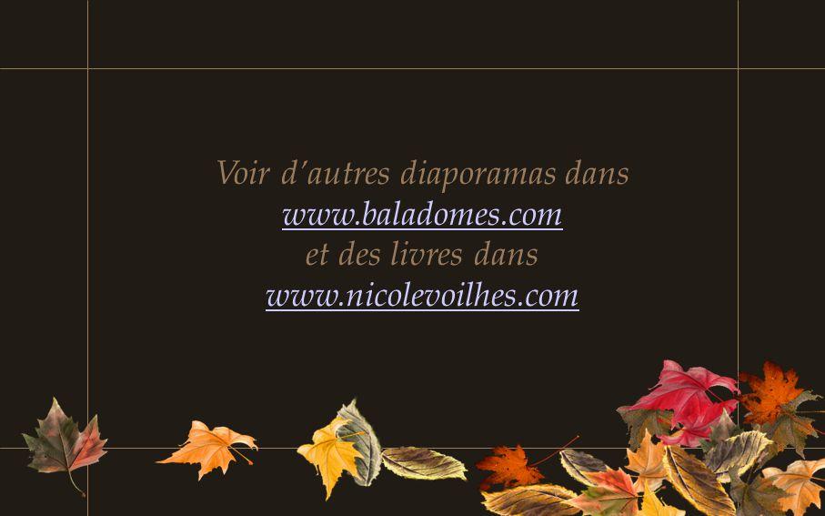 Texte: Nicole Voilhes Photos: Jean Pierre Voilhes Allée des hêtres et Parc d'Allagnat dans la Chaîne des Puys