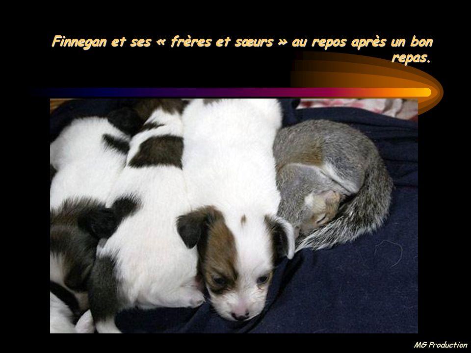 MG Production Finnegan et ses nouveaux amis, 5 petits chiens, s'entendent à merveille, comme si c'était toujours dans l'ordre des choses.