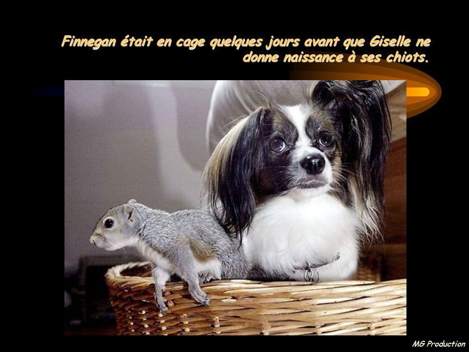 MG Production Lorsque Debby a adopté la petite créature, elle s'est retrouvée avec une infirmière auxiliaire très particulière: sa chienne Giselle, enceinte