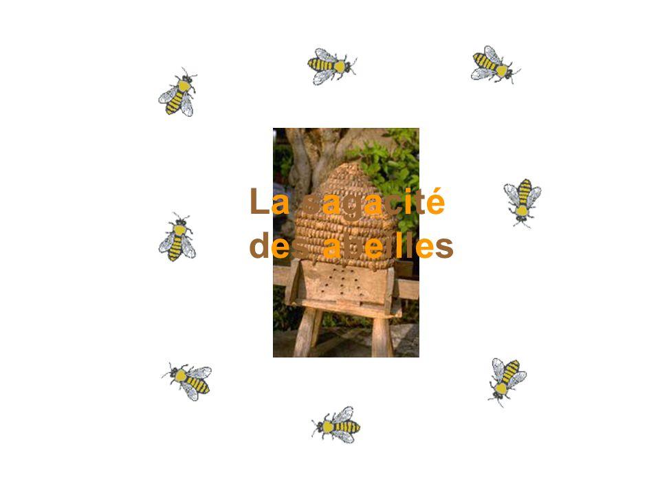 La sagacité des abeilles