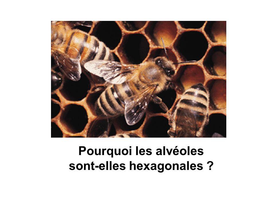 Pourquoi les alvéoles sont-elles hexagonales ?