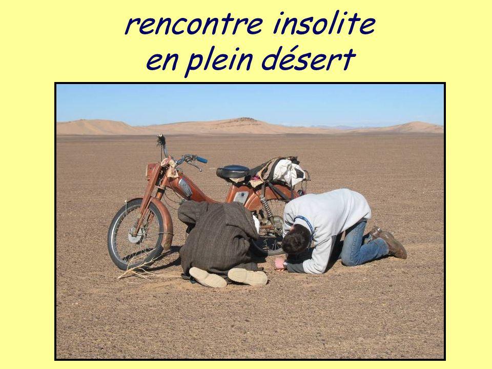 rencontre insolite en plein désert