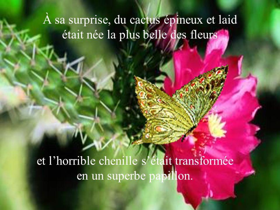 À sa surprise, du cactus épineux et laid était née la plus belle des fleurs et l'horrible chenille s'était transformée en un superbe papillon.