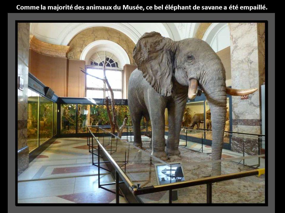 Le roi Léopold II a décidé de sa construction car il voulait que les Belges puissent découvrir les richesses venant du Congo.