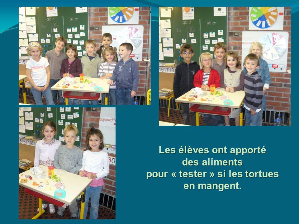 Les élèves ont apporté des aliments pour « tester » si les tortues en mangent.