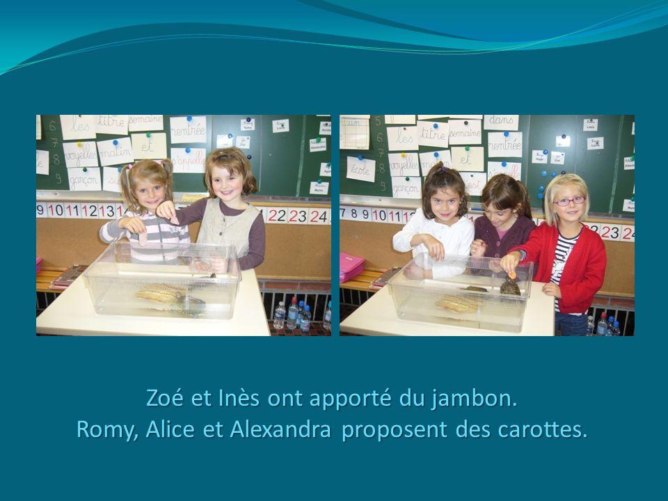 Zoé et Inès ont apporté du jambon. Romy, Alice et Alexandra proposent des carottes.