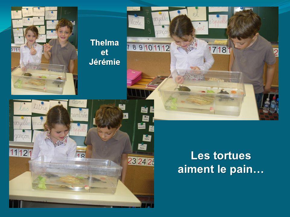 Martin et Louis donnent de la salade et Jérémie... des Smarties !