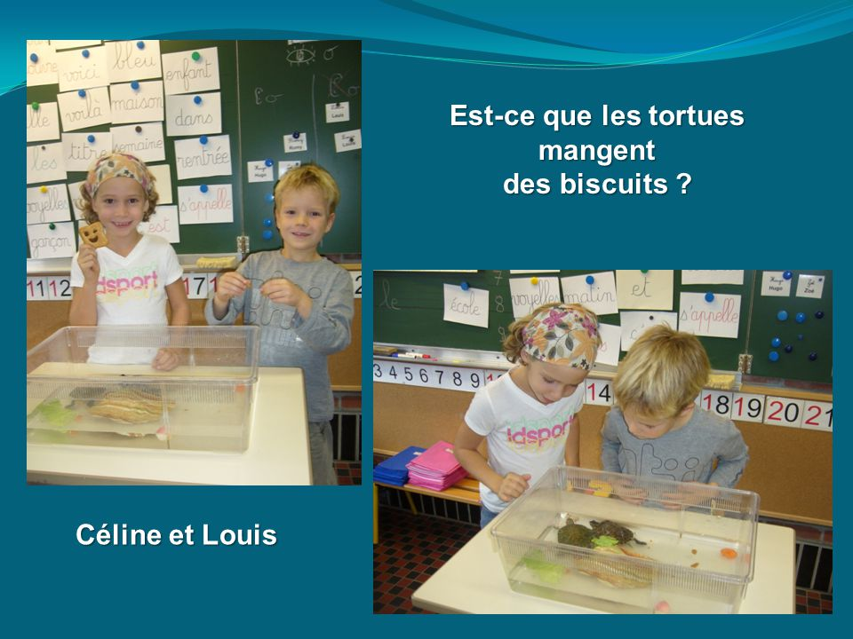 Est-ce que les tortues mangent mangent des biscuits ? Céline et Louis