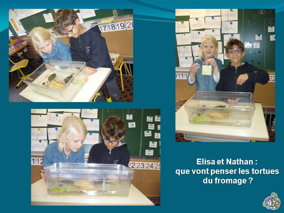 Elisa et Nathan : que vont penser les tortues du fromage