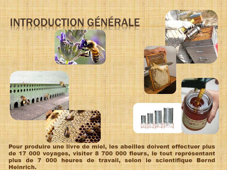 Pour produire une livre de miel, les abeilles doivent effectuer plus de 17 000 voyages, visiter 8 700 000 fleurs, le tout représentant plus de 7 000 heures de travail, selon le scientifique Bernd Heinrich.