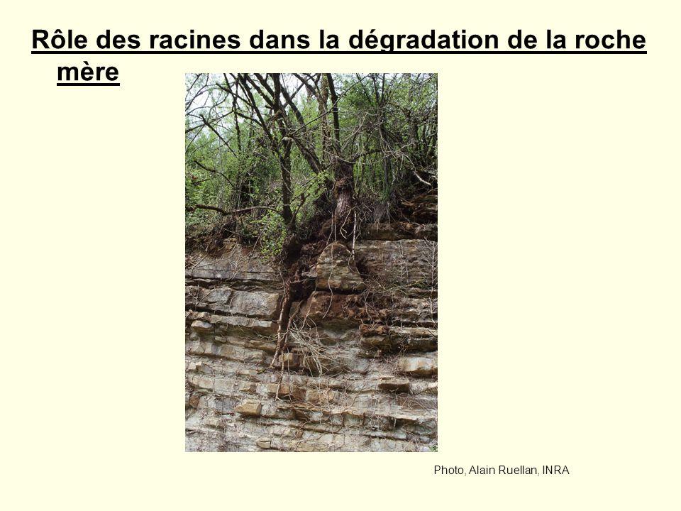 Rôle des racines dans la dégradation de la roche mère Photo, Alain Ruellan, INRA
