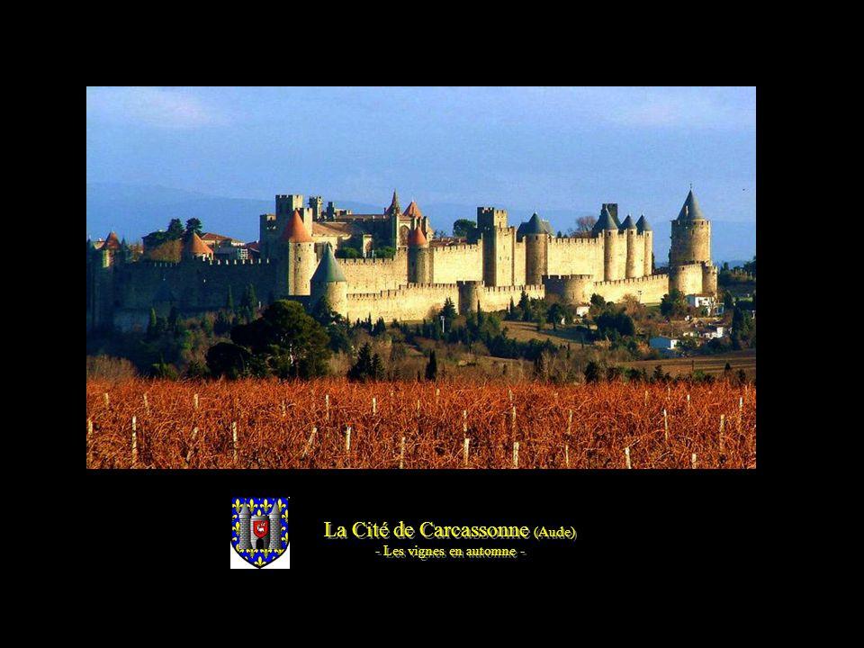 La Cité de Carcassonne (Aude) - Les vignes au printemps - La Cité de Carcassonne (Aude) - Les vignes au printemps -