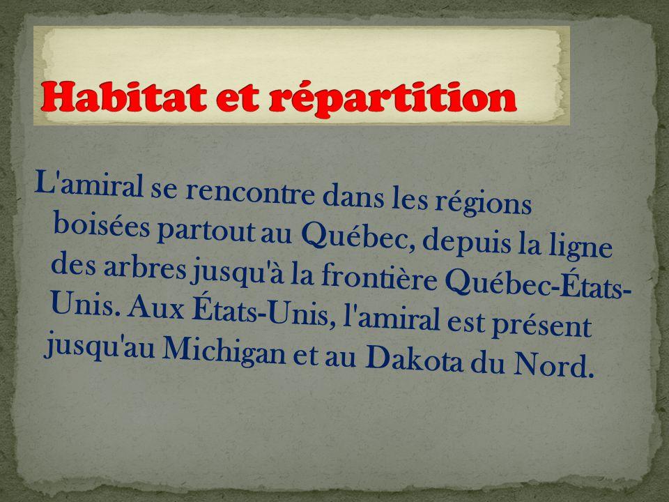 L amiral se rencontre dans les régions boisées partout au Québec, depuis la ligne des arbres jusqu à la frontière Québec-États- Unis.