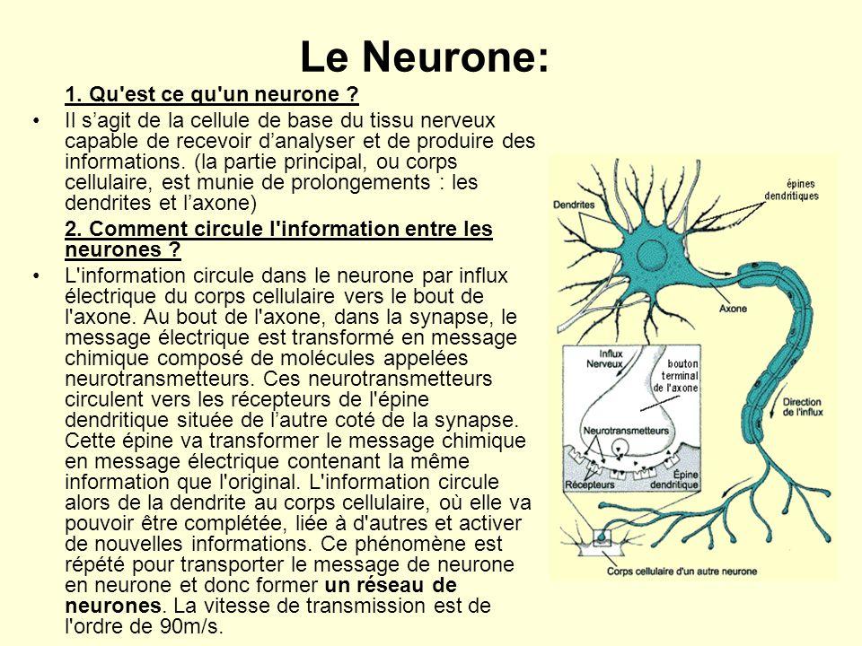Le Neurone: 1. Qu'est ce qu'un neurone ? •Il s'agit de la cellule de base du tissu nerveux capable de recevoir d'analyser et de produire des informati