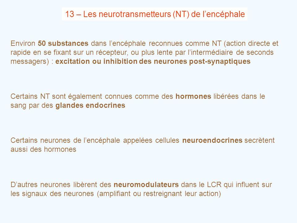 13 – Les neurotransmetteurs (NT) de l'encéphale Environ 50 substances dans l'encéphale reconnues comme NT (action directe et rapide en se fixant sur u