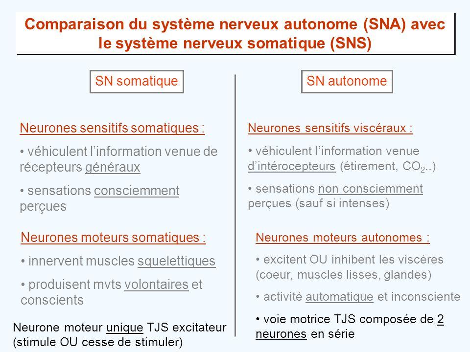 Comparaison du système nerveux autonome (SNA) avec le système nerveux somatique (SNS) SN somatiqueSN autonome Neurones sensitifs somatiques : • véhicu