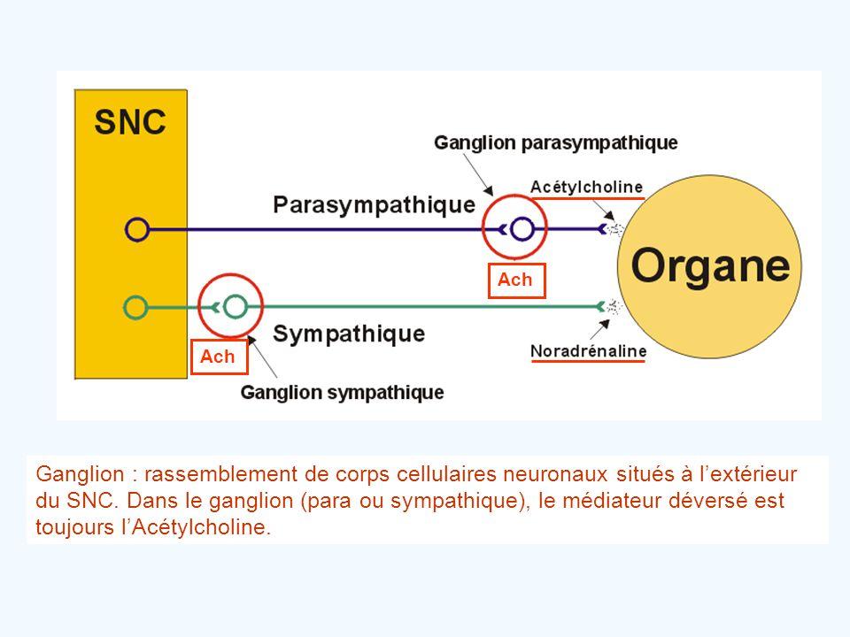 Ganglion : rassemblement de corps cellulaires neuronaux situés à l'extérieur du SNC. Dans le ganglion (para ou sympathique), le médiateur déversé est