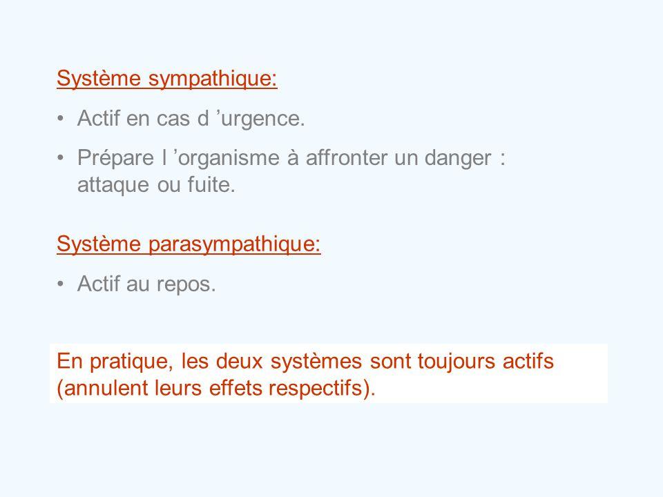 Système sympathique: •Actif en cas d 'urgence. •Prépare l 'organisme à affronter un danger : attaque ou fuite. Système parasympathique: •Actif au repo