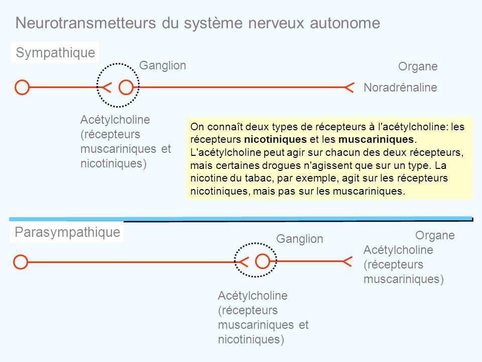 Neurotransmetteurs du système nerveux autonome Sympathique On connaît deux types de récepteurs à l'acétylcholine: les récepteurs nicotiniques et les m
