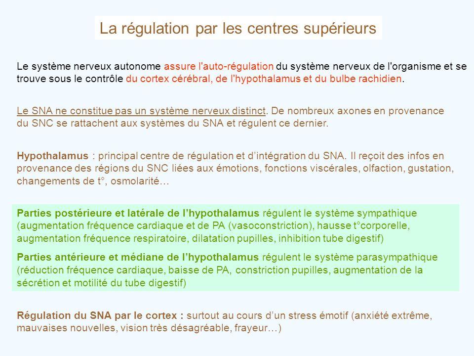 La régulation par les centres supérieurs Le SNA ne constitue pas un système nerveux distinct. De nombreux axones en provenance du SNC se rattachent au