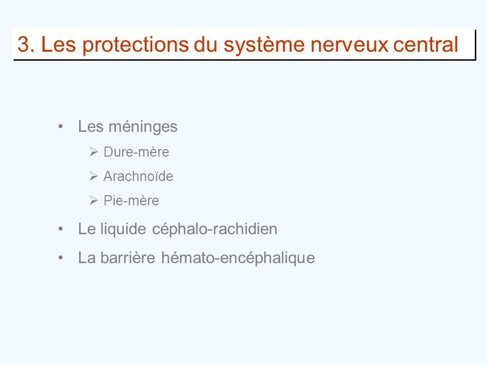 3. Les protections du système nerveux central •Les méninges  Dure-mère  Arachnoïde  Pie-mère •Le liquide céphalo-rachidien •La barrière hémato-encé