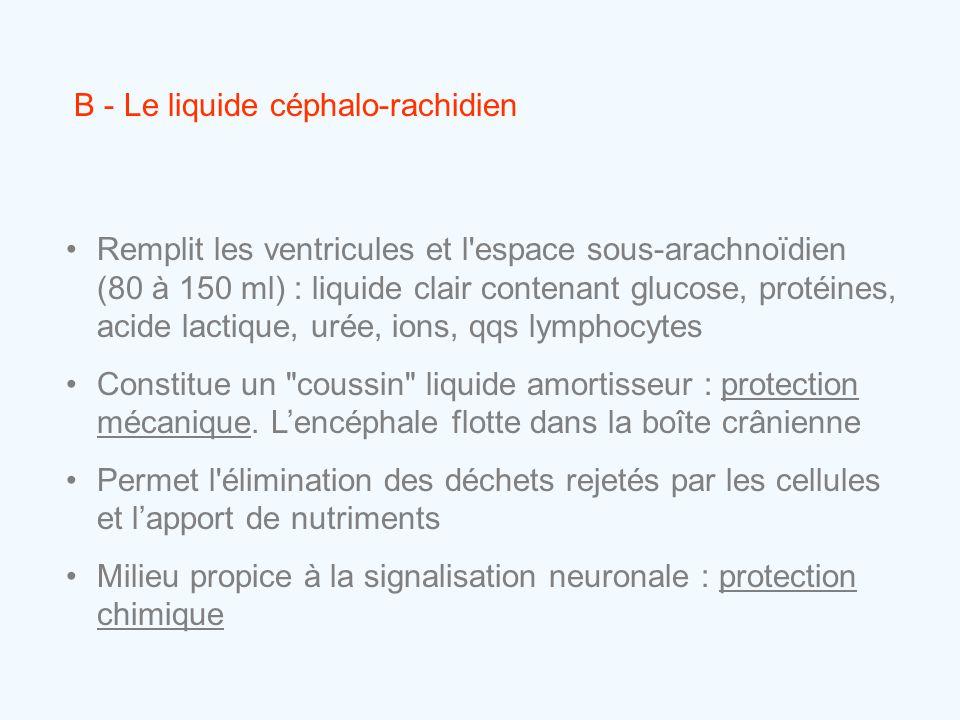 B - Le liquide céphalo-rachidien •Remplit les ventricules et l'espace sous-arachnoïdien (80 à 150 ml) : liquide clair contenant glucose, protéines, ac