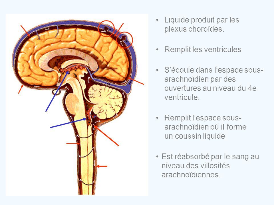 •Est réabsorbé par le sang au niveau des villosités arachnoïdiennes. •Liquide produit par les plexus choroïdes. •Remplit les ventricules •S'écoule dan