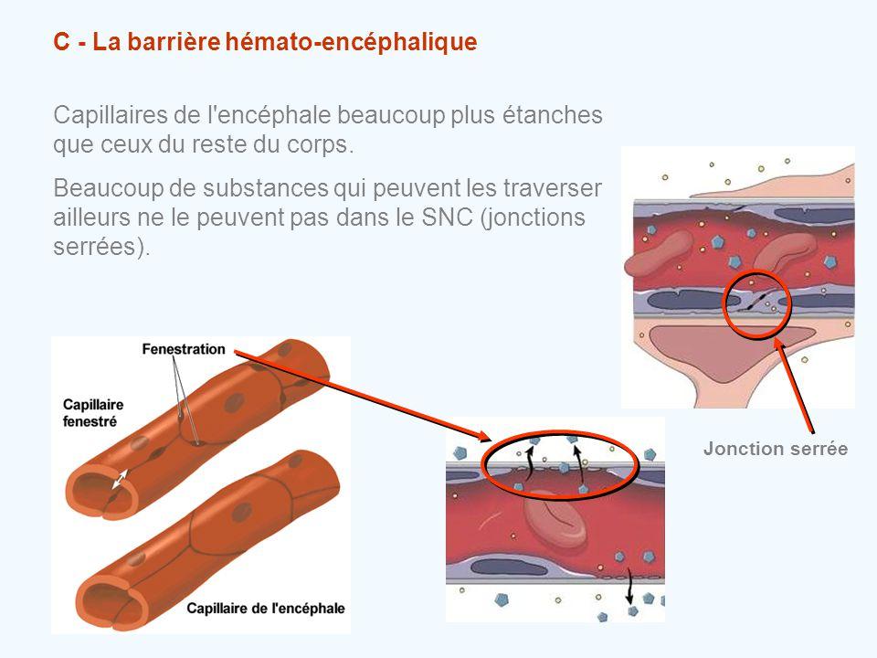 C - La barrière hémato-encéphalique Capillaires de l'encéphale beaucoup plus étanches que ceux du reste du corps. Beaucoup de substances qui peuvent l