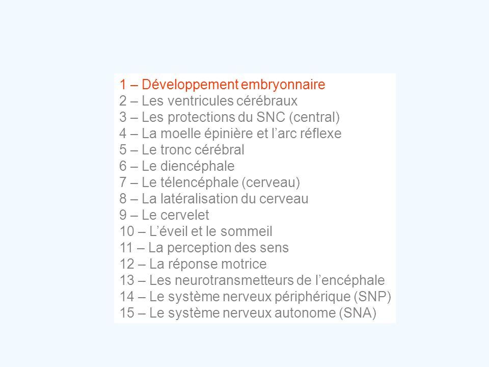 1 – Développement embryonnaire 2 – Les ventricules cérébraux 3 – Les protections du SNC (central) 4 – La moelle épinière et l'arc réflexe 5 – Le tronc