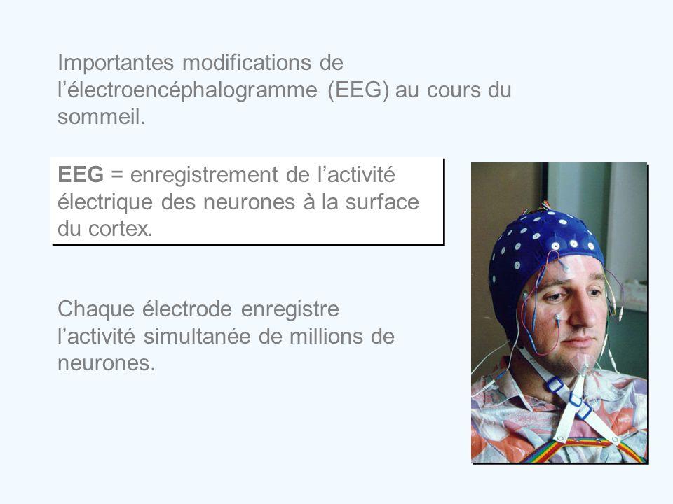 Importantes modifications de l'électroencéphalogramme (EEG) au cours du sommeil. EEG = enregistrement de l'activité électrique des neurones à la surfa